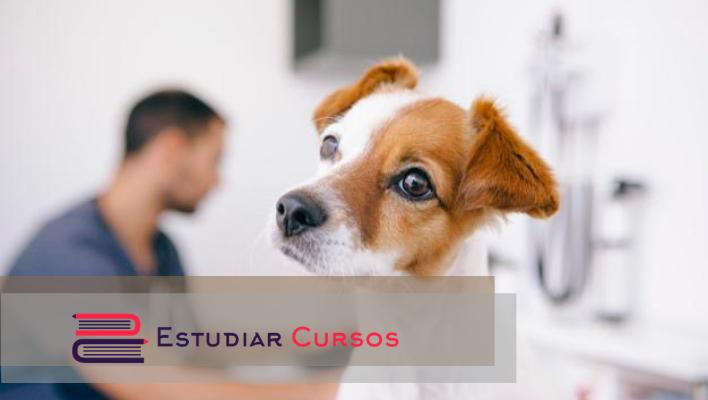 Médico Veterinario Zootecnista